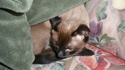 Dexter resting