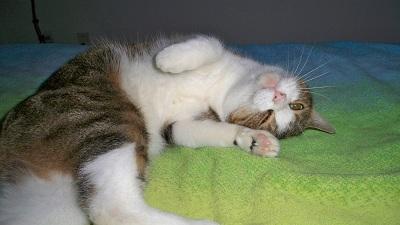 Nacho resting