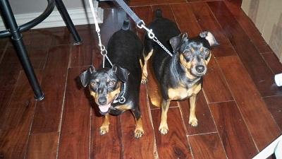 Steve's dogs
