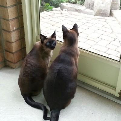 Nimitz & Hermione